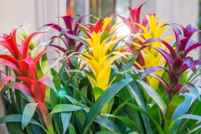 Plant of the Week: Bromeliads