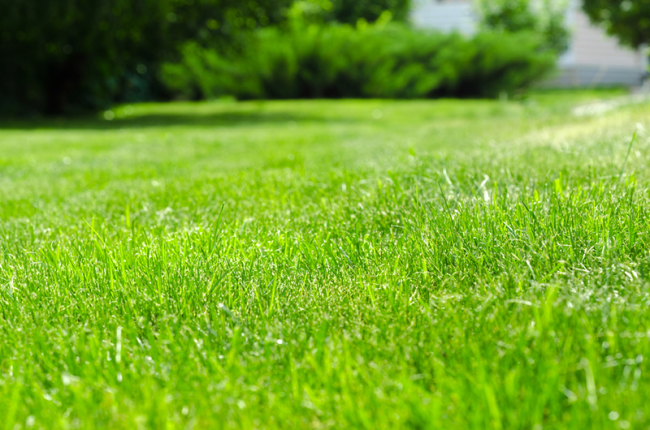 Lawn Care & Chemicals - Welland Vale Garden Inspirations